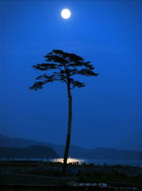 The Miracle Pine